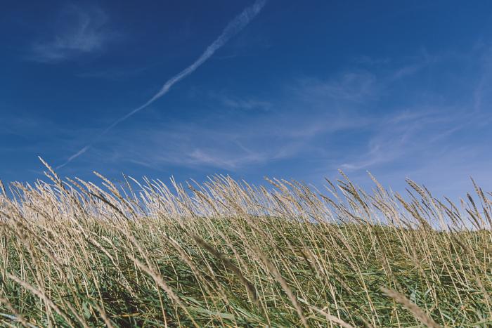 Icelandic Grasses